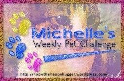 michelle'sweeklypetchallenge