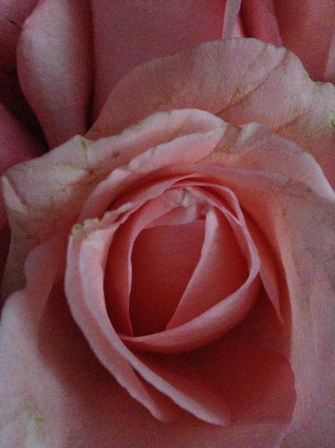 roseforyou