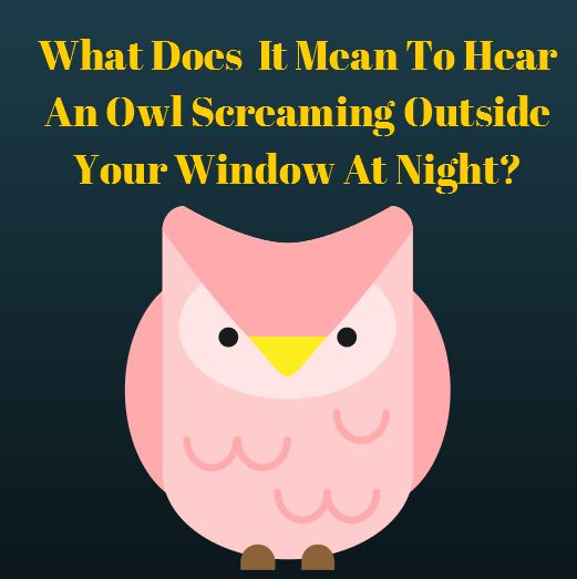What Does It Mean To Hear An Owl Screaming Outside Your Window At