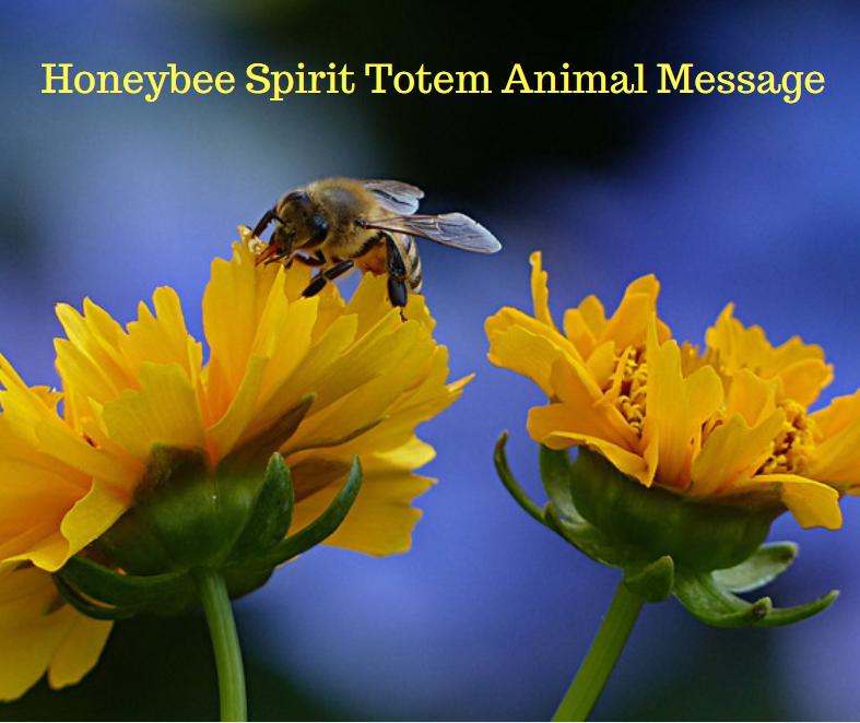 honeybeespirittotemanimalmessage