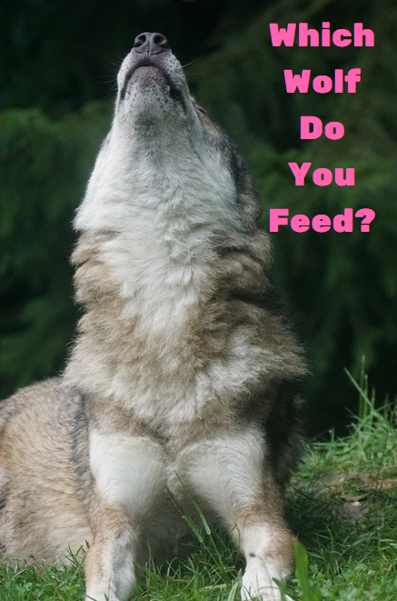 whichwolfdoyoufeed