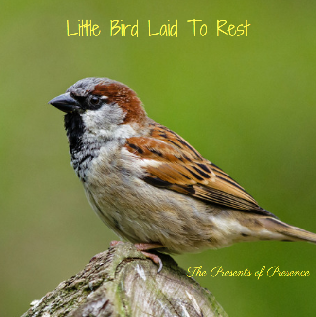 littlebirdlaidtorest