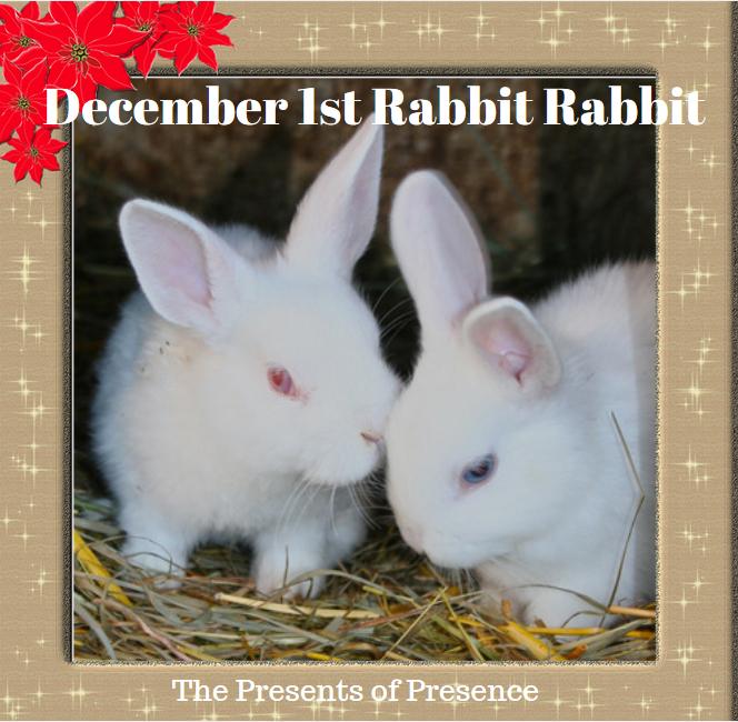 december1strabbitrabbit