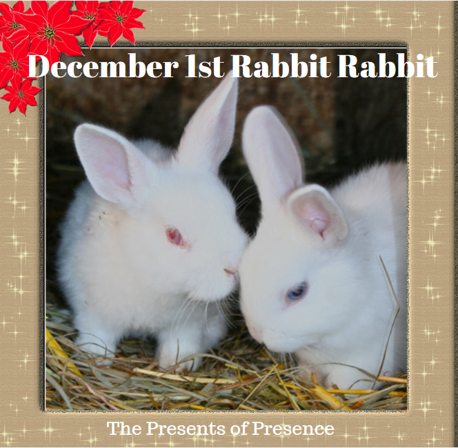 december1strabbitrabbit