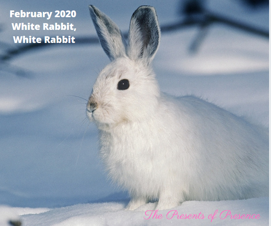 February2020WhiteRabbitWhiteRabbit