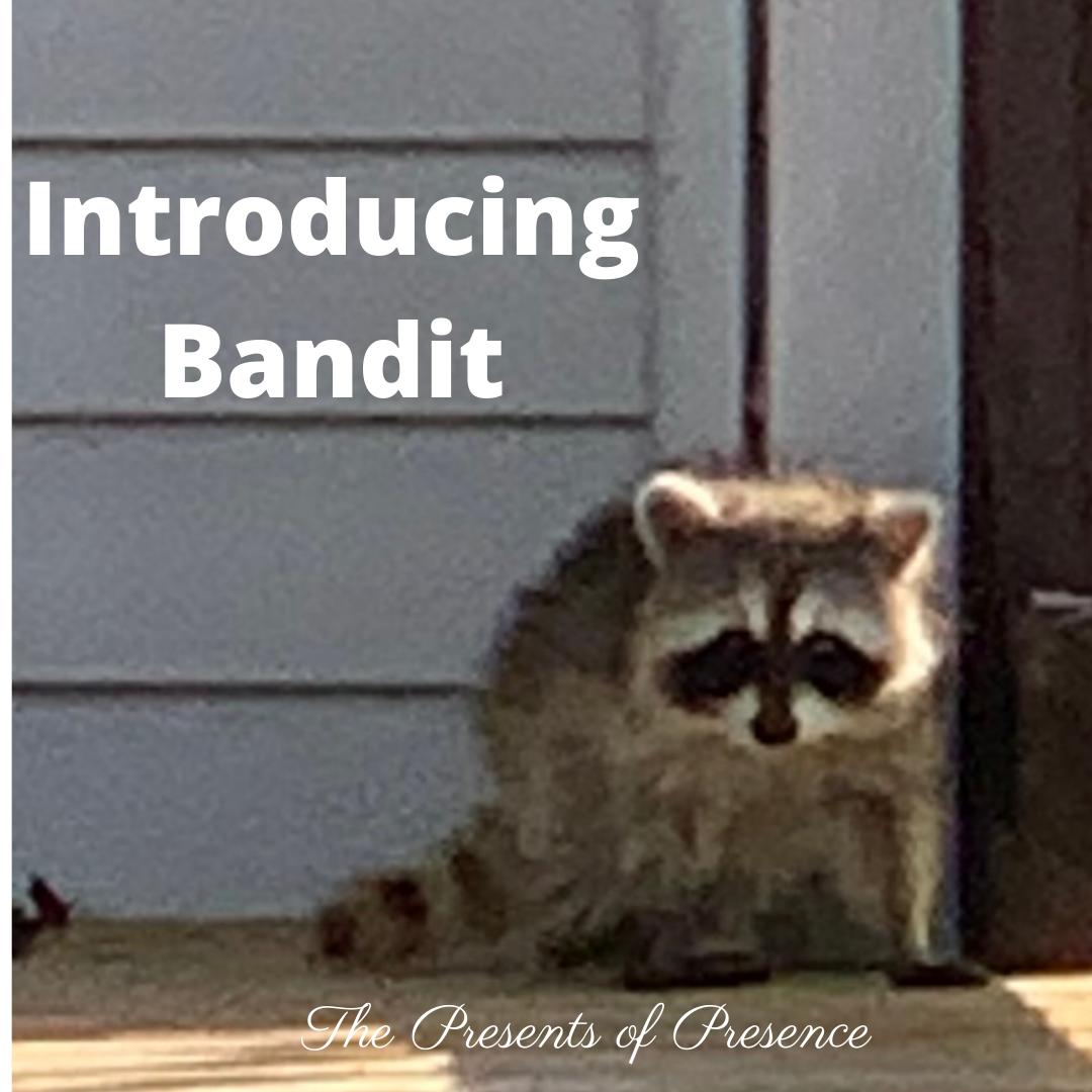 Introducing Bandit