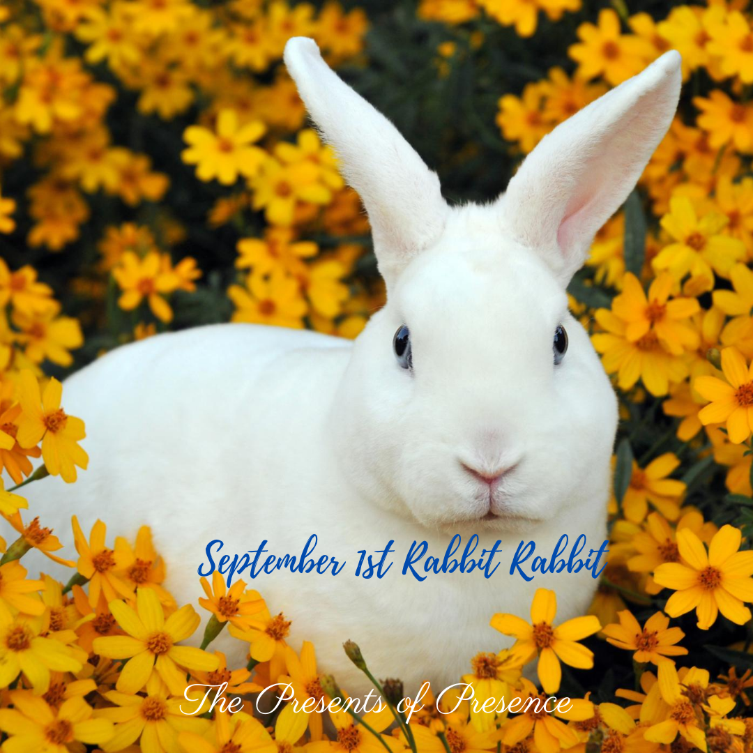 September 1st Rabbit Rabbit
